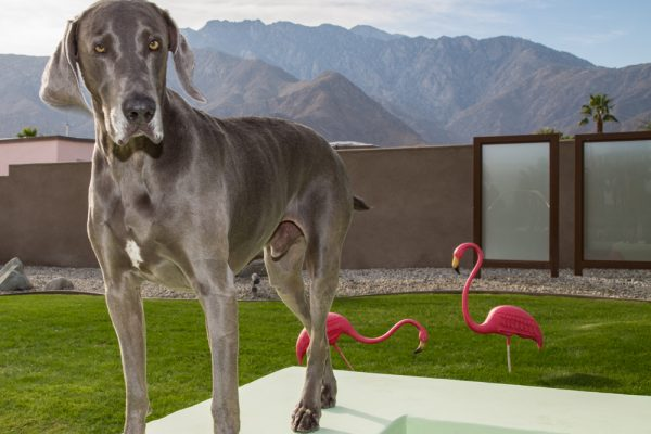 RED-DOOR-PICTURES-real-estate-pet-photography-and-video-palm-desert-indian-wells-rancho-mirage-palm-springs-23